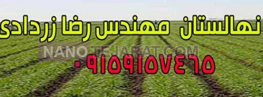 pp_نهالستان_1abf5d_u496__نهالستان-1.jpg